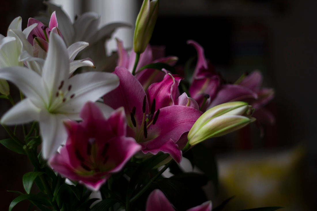 pink and white lilies closeup